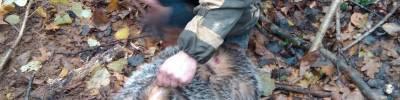 Какие бывают виды охоты на барсука – описание и видео, что необходимо и трофеи